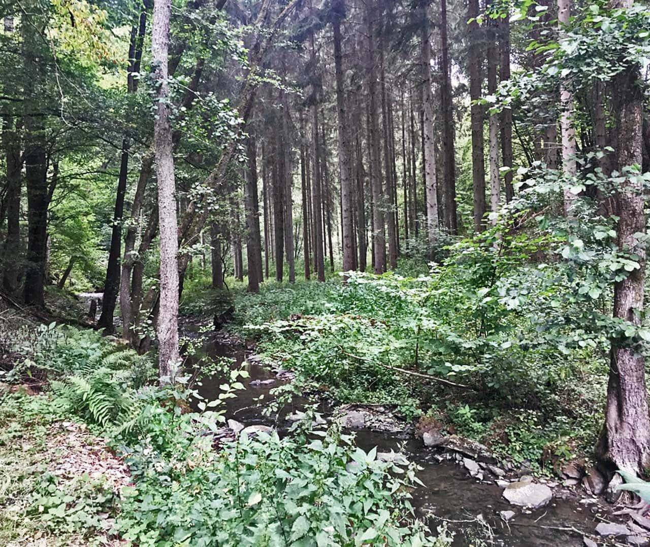Ausgeglichenheit und Ruhe in den Wäldern